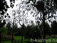 arka-bereza2
