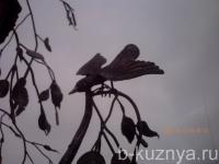 arka-bereza7