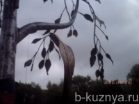 arka-bereza9
